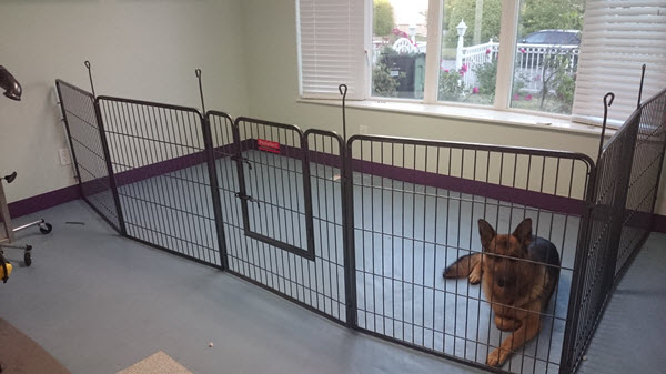 Dog Groomers Large Relaxing Area
